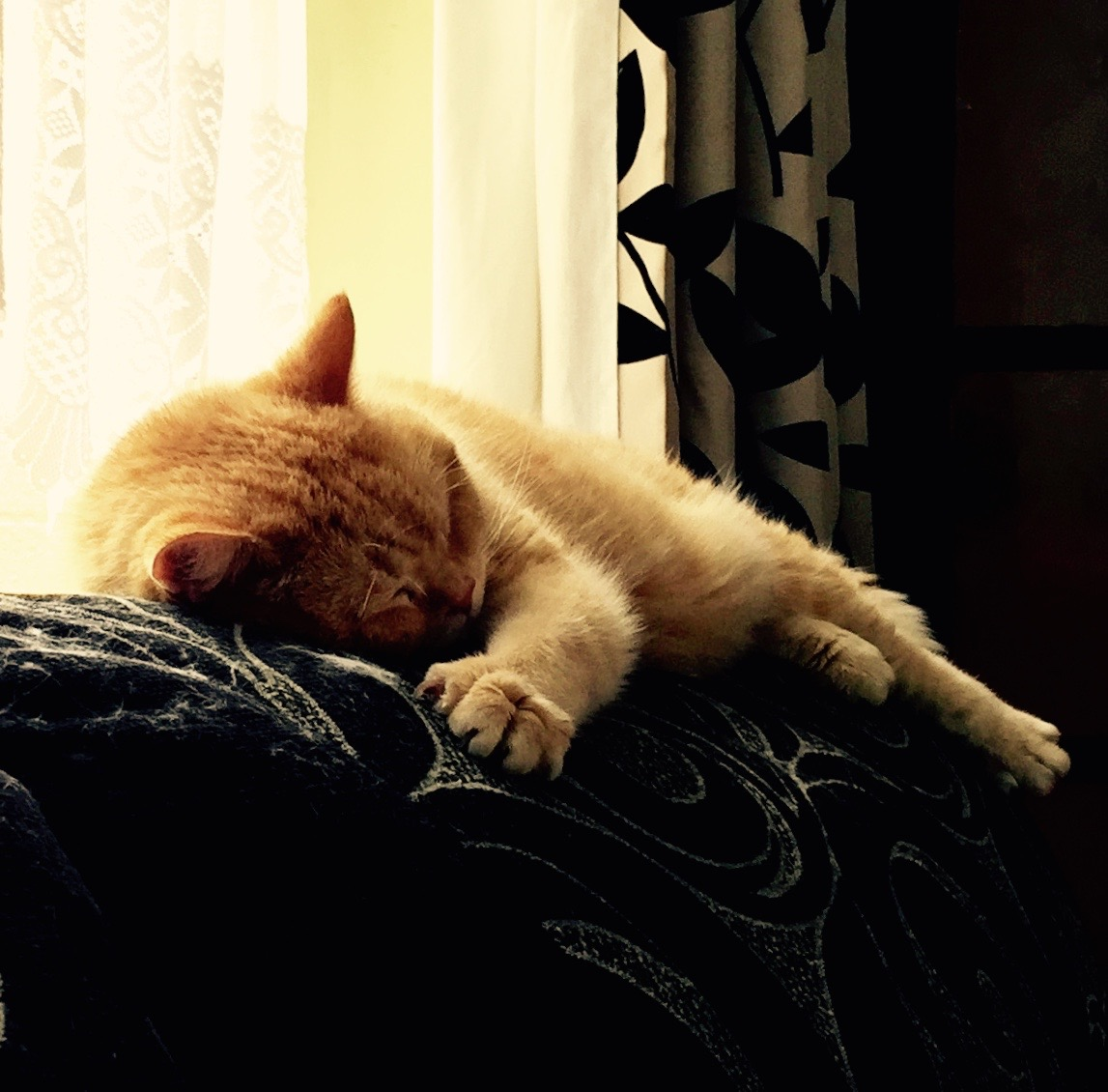 A ginger cat asleep on the settee